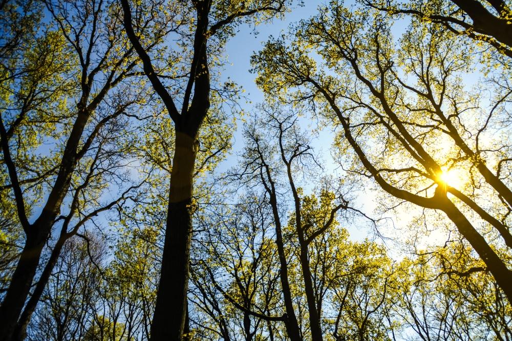 trees sunshine